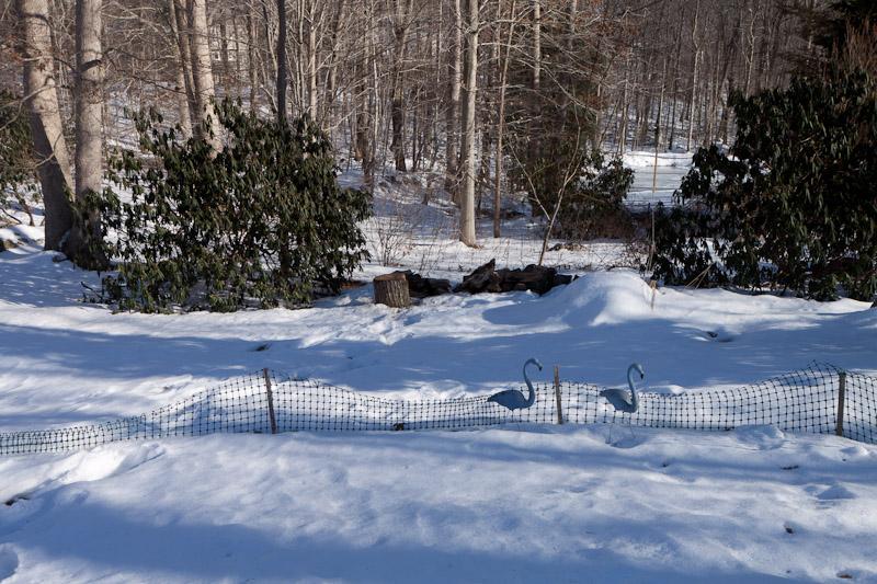 dwindling woodpile-7504