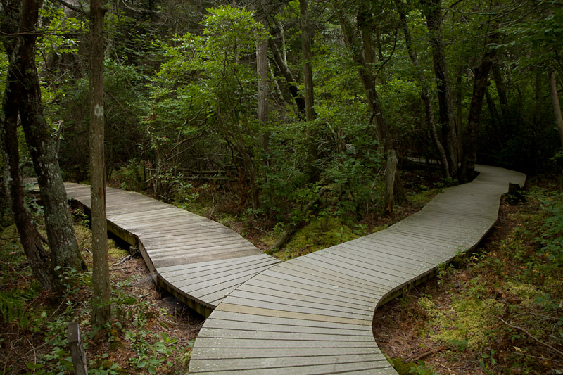 atlantic cedar swamp trail-0141