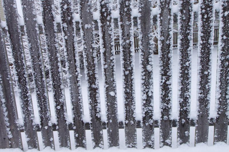 picket fence-5466