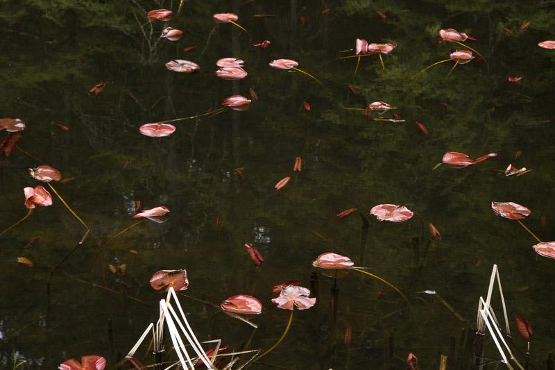 pond-6540